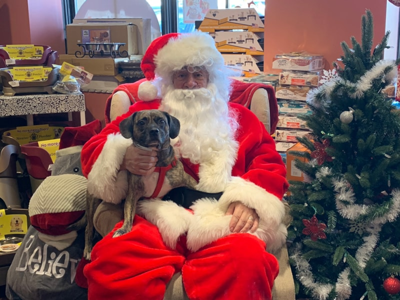 Santa Paws made a special appearance at Concord Pets in Paoli, PA, to take some holiday photos with your pets. WMGK Classic Rock Squad were on hand handing out great prizes as well.
