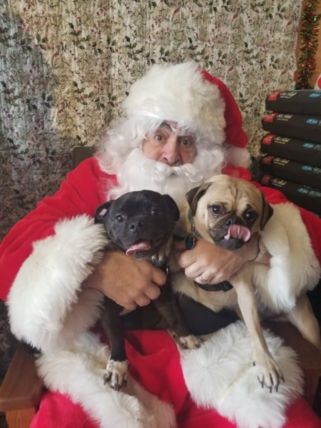 Santa Paws made a special appearance at Concord Pets in Cherry Hill, NJ, to take some holiday photos with your pets. WMGK Classic Rock Squad were on hand handing out great prizes as well.